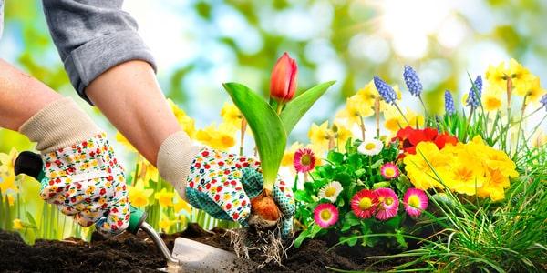 Jardin en mars